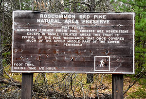 Red Pine Natural Area